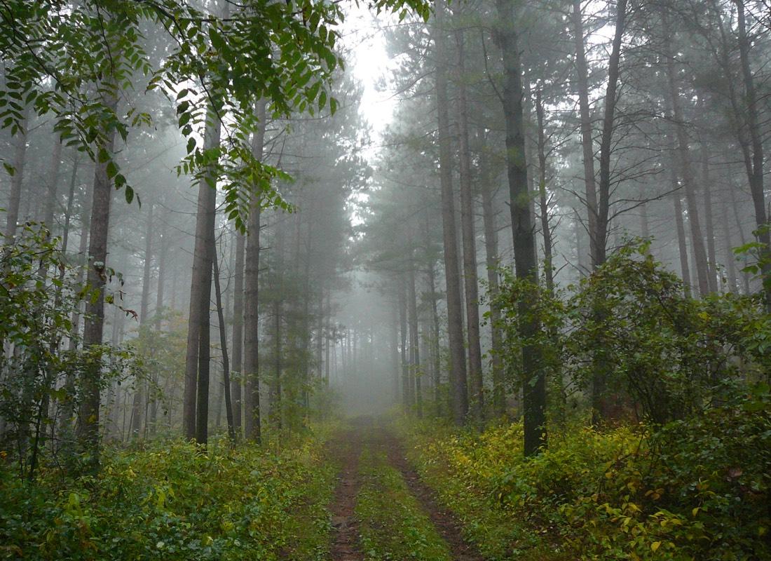 Ganaraska Forest Trail in Spring