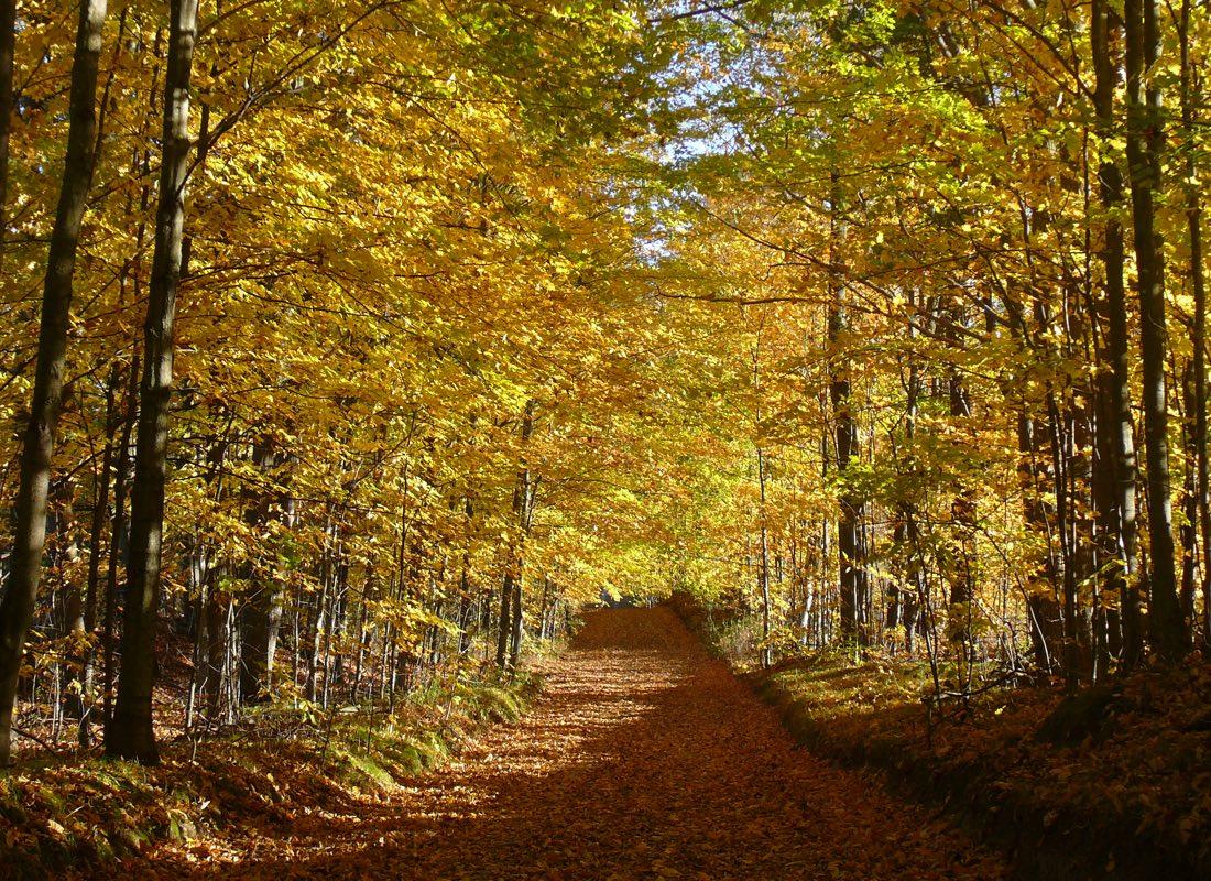 Ganaraska Trail in Autumn