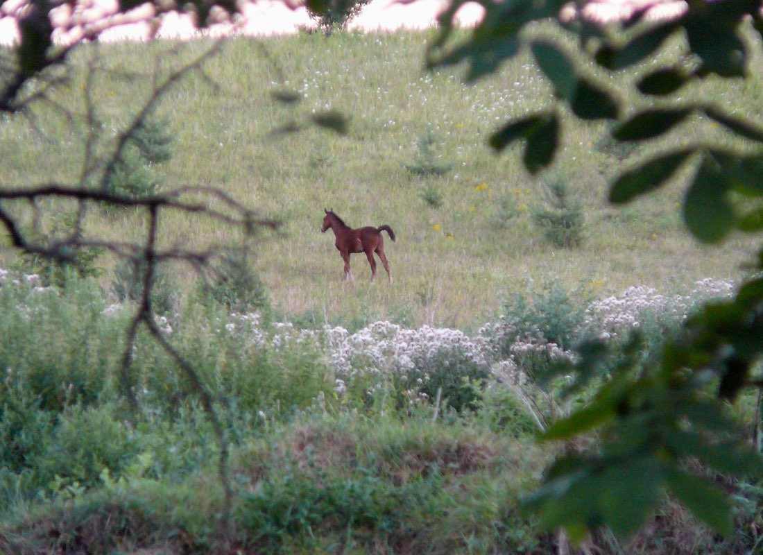 Moonlight & Pines B&B Neighbours in the Meadow