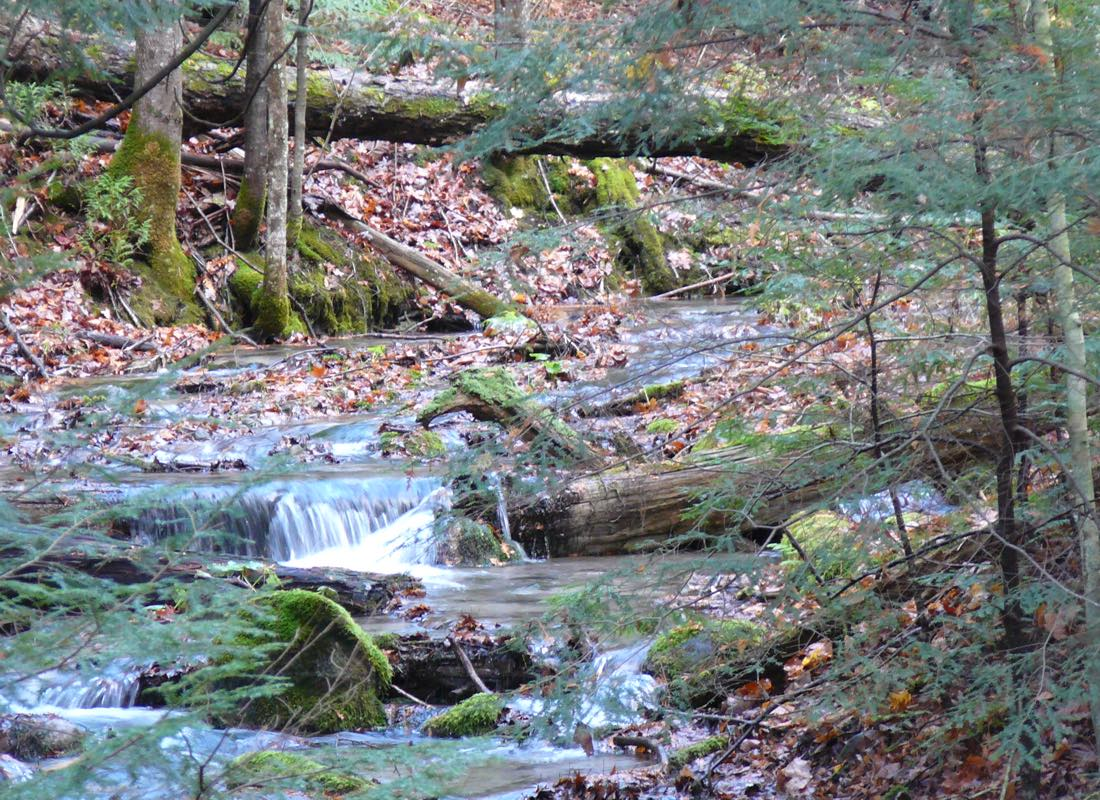 Ganaraska Forest Stream in Autumn