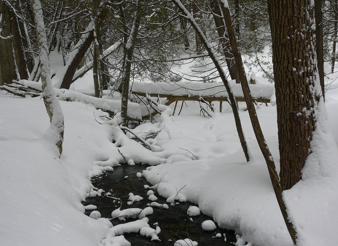 Ganaraska Forest Stream in Winter
