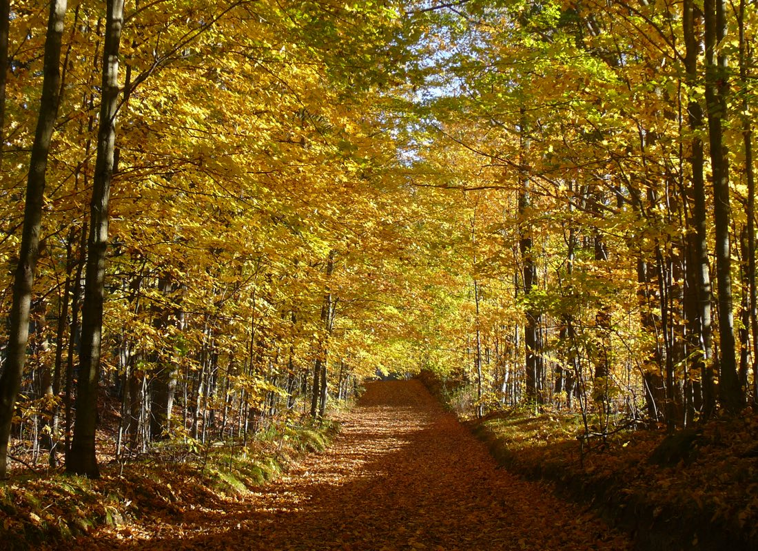 Ganaraska Trail in Autumn